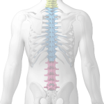 Care for your spine with Lydney Osteopaths, in the Forest of Dean